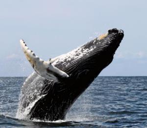 Es urgente proteger a las ballenas del plástico