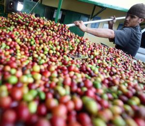 Agricultura retará orden de magistrado federal