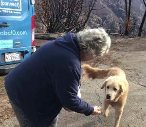 Un perro que sobrevivió los incendios en California custodió la casa de su dueña por semanas