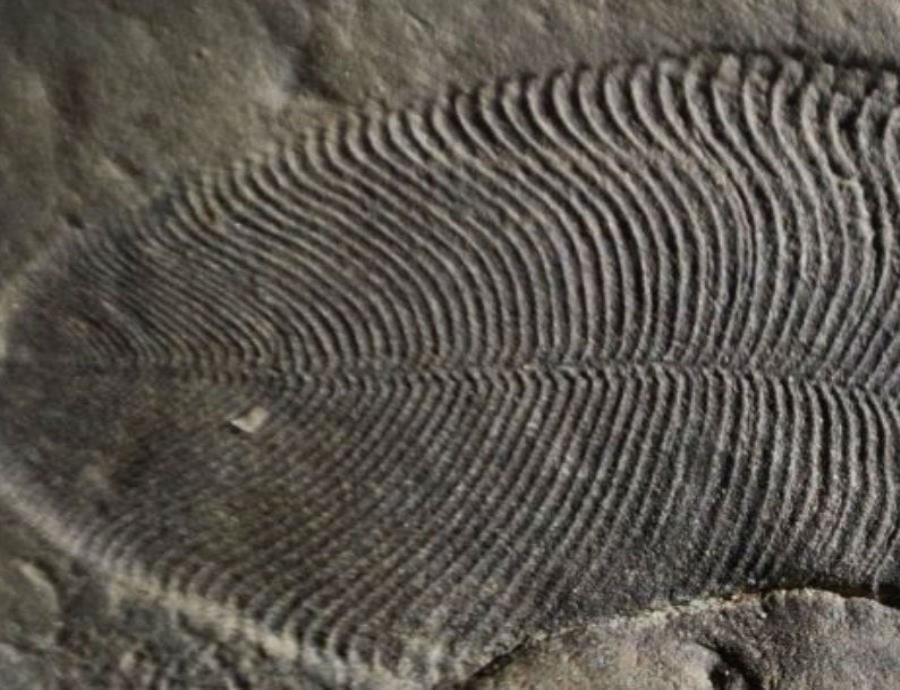 Un estudio revela cuál es el animal más antiguo de la Tierra (semisquare-x3)