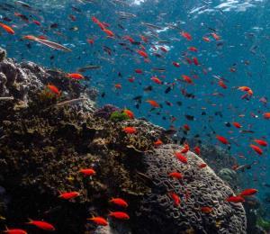 Blanqueamiento masivo afecta a Gran Barrera de Coral