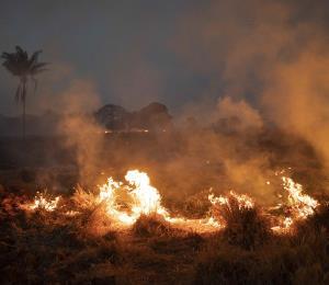 La Amazonia en llamas y lecciones isleñas