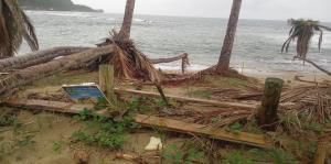 El huracán María destruyó el 24% de los nidos de carey