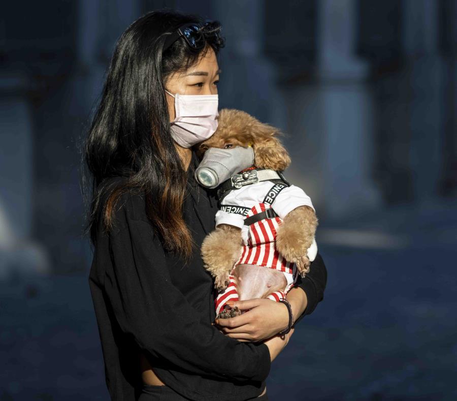 Un perro dio positivo al test de coronavirus