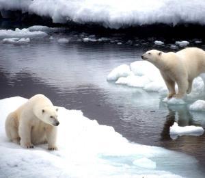 Prevenir la extinción masiva