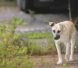 Iniciativa escolar contra el maltrato de animales en Puerto Rico