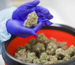 La brecha del canabis medicinal