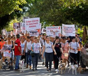 Marcha inédita a favor de los animales en Cuba
